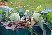 Frisch geerntetes Gemüse im Spätsommer