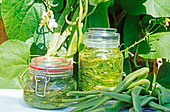 Preserved Runner beans in salt brine in jars outside with runner bean plants behind outside in summer