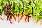 Colourful stemmed chard