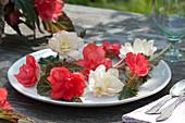 Blüten von Begonia Iconia 'Miss Malibu' 'Miss Montreal' als Tischdeko