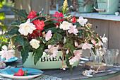 Begonia Iconia 'Upright White', 'Miss Montreal', 'Miss Malibu' (Begonien)