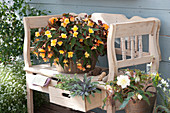 Begonia Iconia 'Lucky Strike' , 'Upright White' mit Kräutern
