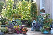 Terrassen Arrangement mit Gemüse und Sommerblumen