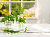 Various fresh herbs in glasses on a table beside a window