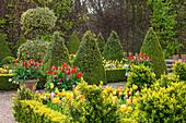 Formaler Garten mit blühenden Tulpen