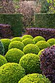 Formaler Garten mit Buchs-Kugeln und Berberitzen-Hecke