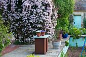 Sichtschutz im Garten mit Kletterpflanzen