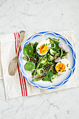 Green salads with egg