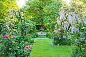 Blühender Blauregen an Rankgerüst als Torbogen, Blick auf Springbrunnen