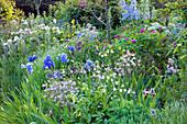 Üppiges Frühsommer-Beet mit Schwertlilien, Akelei und Rosen