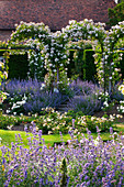 Park mit weißen Ramblerrosen an Bögen und Katzenminze