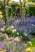 weiße Rosen und blaue Katzenminze, Bögen mit Ramblerrosen, Digitalis (Fingerhut)