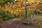 Bank im Herbst unter Magnolienbaum