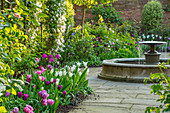 Formaler Garten mit Springbrunnen und Tulpen (Tulipa) im Beet