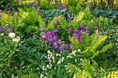 Beet mit Etagen-Primeln (Primula candelabra), Farnen und Pfingstrose (Paeonia)
