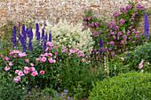 Blühendes Beet mit Rosen (Rosa) und Rittersporn (Delphinium)