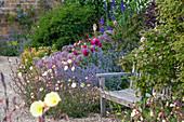 Bank am Frühsommer-Beet mit Nachtkerze (Oenothera), Nepeta (Katzenminze), Zierlauch (Allium) und Rosen (Rosa)