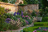 Sommer-Beet im Country-Look, Rittersporn (Delphinium), Rosen (Rosa), Busch-Knöterich (Polygonum) und Nachtkerze (Oenothera)