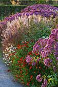 Herbst-Beet mit Wasserdost 'Riesenschirm', Sonnenbraut und Chinaschilf