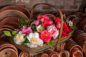 Korb mit Kamelien-Blüten (Camellia japonica)