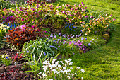 Frühlings-Beet mit Lenzrosen (Helleborus orientalis), Frühlingsstern (Ipheion) und Pfingstrosen (Paeonia)