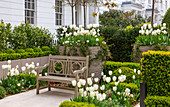 Terrasse mit Bank umrahmt von weißen Tulpen 'Purissima', 'Cardinal Mindszenty', 'Clearwater' (Tulipa) und Buchs (Buxus)