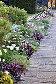 Rabatte mit Tulpen 'Rems Favourite' (Tulipa), Gräsern und Stauden am Weg