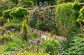 Beet mit Zierlauch 'Globemaster' (Allium), Junkerlilie (Asphodeline), Kletterrosen (Rosa) an Gartenmauer