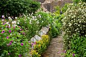 Cloches im Beet mit Lerchensporn (Corydalis), Nachtviole (Hesperis) und Storchschnabel (Geranium psilostemon)