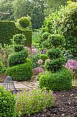 Formaler Garten mit Buchs Topiary