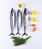 Zutaten für Makrelen-Rillettes