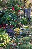 Bauerngarten-Beet im Herbst mit Blumen und Gemüse