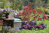 Herbst-Beet mit Perückenstrauch und Kissenastern
