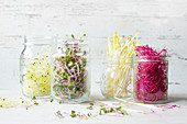 Fresh sprouts in glass jars (leek, radish, pea, beetroot)