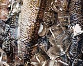 Roher Fisch auf Eis (Ausschnitt)