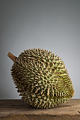 A durian fruit in front of a grey background