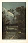 Comet over trees, historical illustration