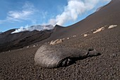 Lava bomb on slope of volcano, Pico do Fogo
