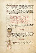 Comets, 15th century