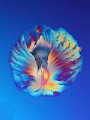 Urea crystal, polarised light micrograph
