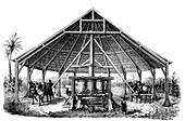 19th Century sugar cane production, Cuba