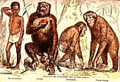 Evolution of mammals, 19th Century illustration