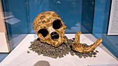 La Chapelle-aux-Saints Neanderthal skull