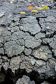 Coastal erosion of basalt