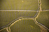 Vineyards, Spain, aerial photograph