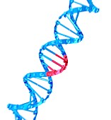 CRISPR-Cas9 gene editing, illustration