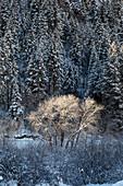 Glenwood Canyon in winter, Colorado, USA