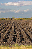 Ploughed field, Texas, USA