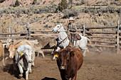 Cattle ranch, Colorado, USA