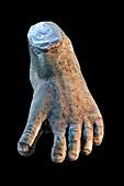 Little Foot Australopithecus fossil foot reconstruction